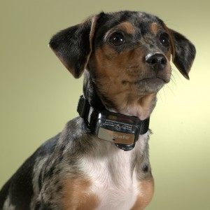 petsafe pbc19-12443 collier anti aboiement petit chien