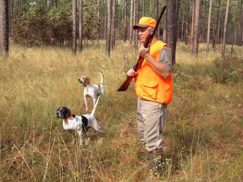 chiots dressage pour la chasse