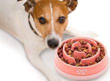 chien avec gamelle anti glouton