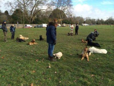 pension chien education canine paris